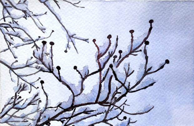 1.25.15_Dogwood-snow_620w