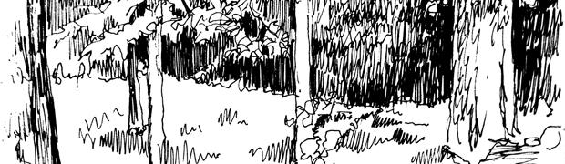 Woodspath_620w_narrow